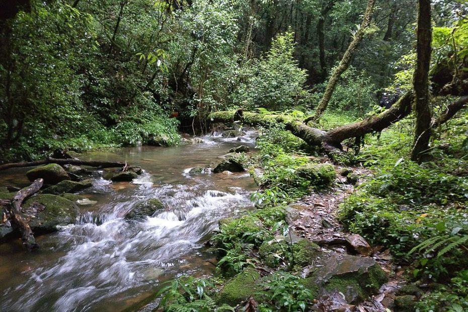 Sacred_forest_Mawphlang_Meghalaya[1]